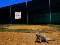 The No Photos Iguana : Guantanamo Bay the War on Terror Prison : Cuba